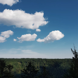 freetoedit blackforest nature landscape photography exploringnature