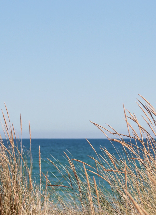 #nature #beautifulday #summerdays still...                                               #september #warmweather #beachvibes #dunes #beachdunes #wildplants #grass #summerbreeeze #seaview #horizon #blueskies #gooddaysgoodvibes #lowangleshot #naturephotography                                                                  #freetoedit