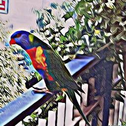 myedit myfoto pappagallo piante balcone magiceffects oileffect mask