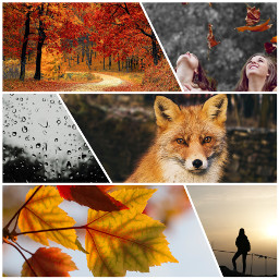 autumn moody fox leaves collage people tree forest challenge cute interesting amazing ccautumnmoodboard autumnmoodboard freetoedit