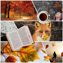 aesthetic autumn autumnmoodboard colorful warm freetoedit
