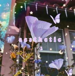 flowers aestheticart editbyme freetoedit rainbow purpletheme aesthetic aestheticflowers pretty fyp foru