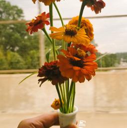 freetoedit photography fall