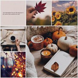 aesthetic warm autumn freetoedit ccautumnmoodboard autumnmoodboard