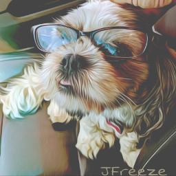 glasses pistol dog pet