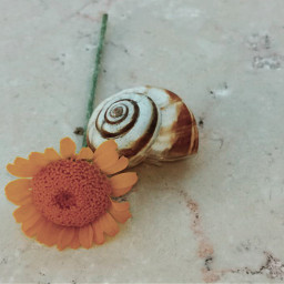 myphoto photography photographer photograph photooftheday photobyme photoedit hd nature flowers snail september summer feelbetter kindness background freetoedit