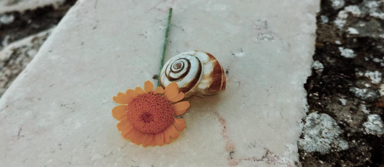 #myphoto #photography #photographer #photograph #photooftheday #photobyme #photoedit #hd #nature #flowers #snail #september #summer #feelbetter #kindness #background   ᵐᵃᵏᵉ ᵖᵉᵒᵖˡᵉ ᶠᵉᵉˡⁱⁿᵍ ᵇᵉᵗᵗᵉʳ ᵃⁿᵈ ʸᵒᵘ'ˡˡ ᵇᵉ ᵇᵉᵗᵗᵉʳ  Photo by: @daisylazyphotos