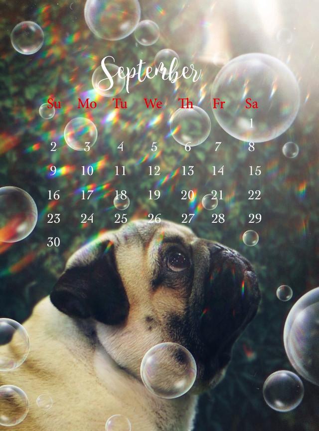 #dog #september #calendar #bubbles #prisma #pug #ftestickers #madewithpicsart #picsarteffects