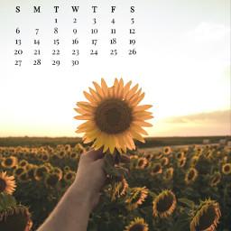 september2020 sunflowers fields golden hand srcseptembercalendar freetoedit