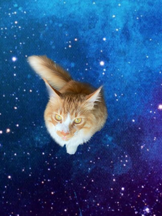 My cat 🥺