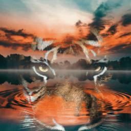 freetoedit tiger wildanimal myart doubleexposure