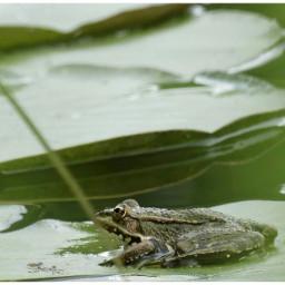 frogprince froggy froglove naturesbeauty naturelover