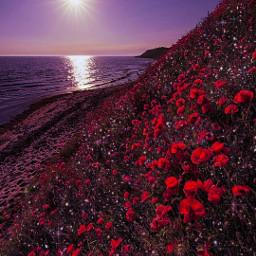 light sun flowers environment magical