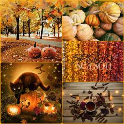 spookyseason autumn fall collage blackcat ccautumnmoodboard autumnmoodboard freetoedit