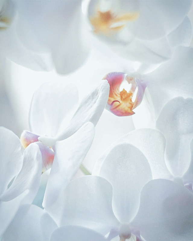#nature #flowers #naturesbeauty #orchids #delicateflower #exoticflower #beautiful and #ephemeralbeauty #softaesthetic #closeupflowerphotography