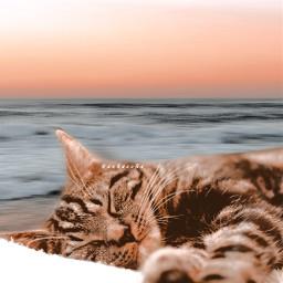 sea fantasy cat interesting naight sleep sleepy sleeping