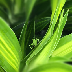 freetoedit insect myphotography green leaves