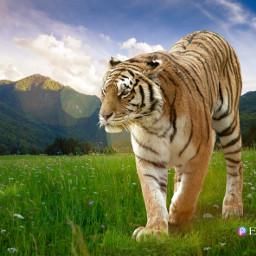 tiger gigantanimal picsart editedwithpicsart luces animales tigere soldier soldado edicion freetoedit