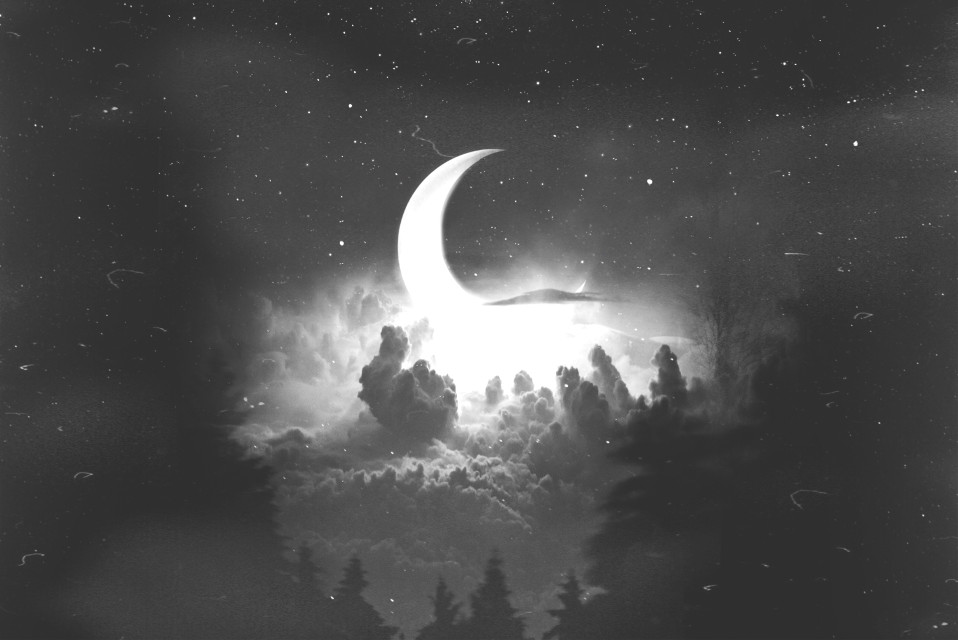 #freetoedit #replay #night #sky #forest #stars #fog #moon #black #white