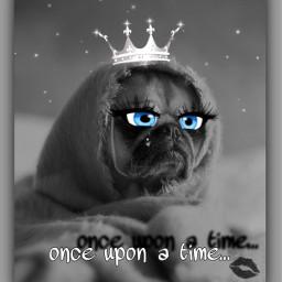 freetoedit fairytale funnydog dogsofpicsart princess eccartoonifiedanimals