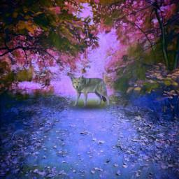freetoedit heypicsart magical forest nature