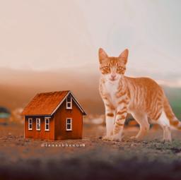freetoedit home cat