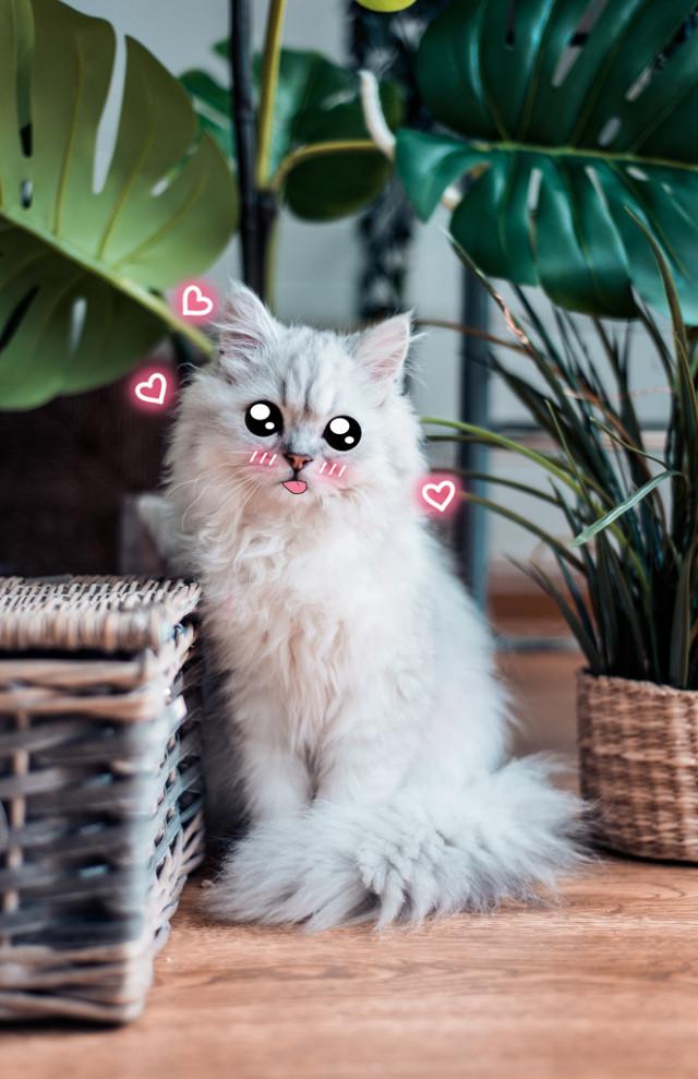 #cat #kitten #kitty #cartoon #cute #kawaii #whitecat #pink #blush #cartooneyes #neon #neonhearts #hearts #pinkhearts #fluffy #leaves #green #monstera