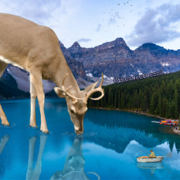 deer animal water lake boat nature freetoedit