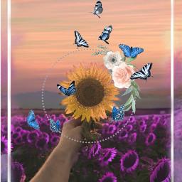 freetoedit girasol🌻 girasoles🌻 girasol😍🌻 beutyful love edit happy ircsunflowerinmyhand sunflowerinmyhand girasol girasoles