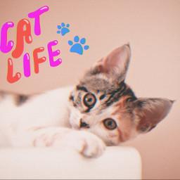 cat cats animals catlife freetoedit