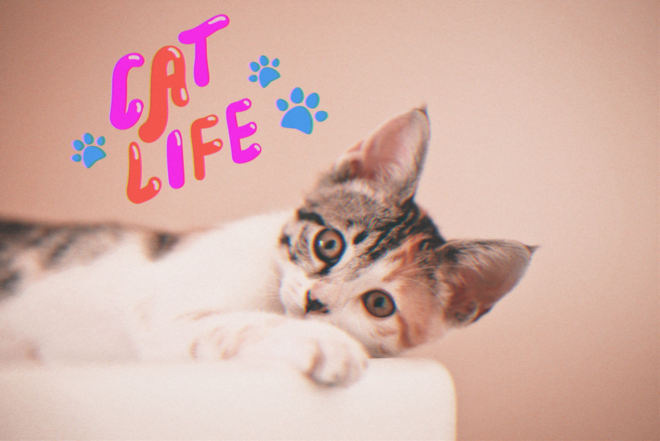 #cat #cats #animals #catlife #freetoedit