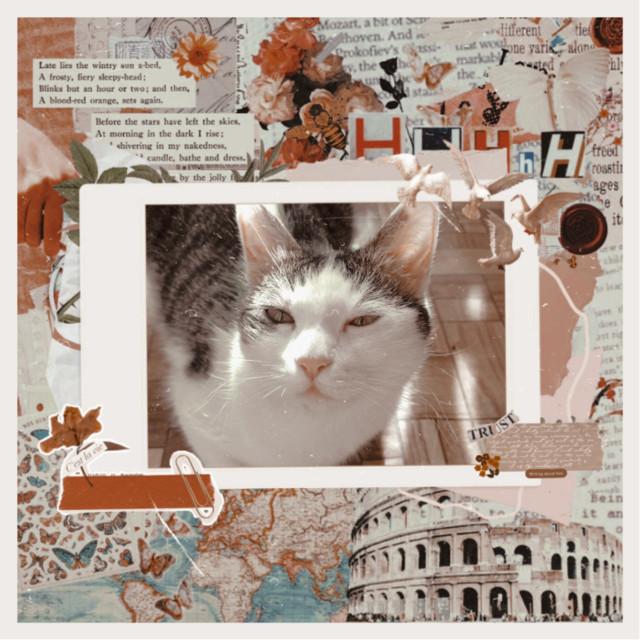 #picsart #picsartpets #cats #freetoedit