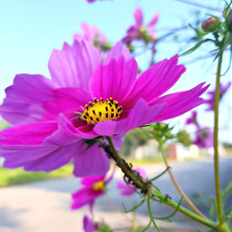 closeup flowers pink flower nature