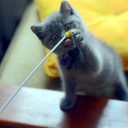 photography cat picsart love