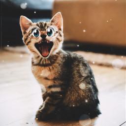 cartooneyes cat cute brindle baby bigyawn eccartoonifiedanimals cartoonifiedanimals freetoedit
