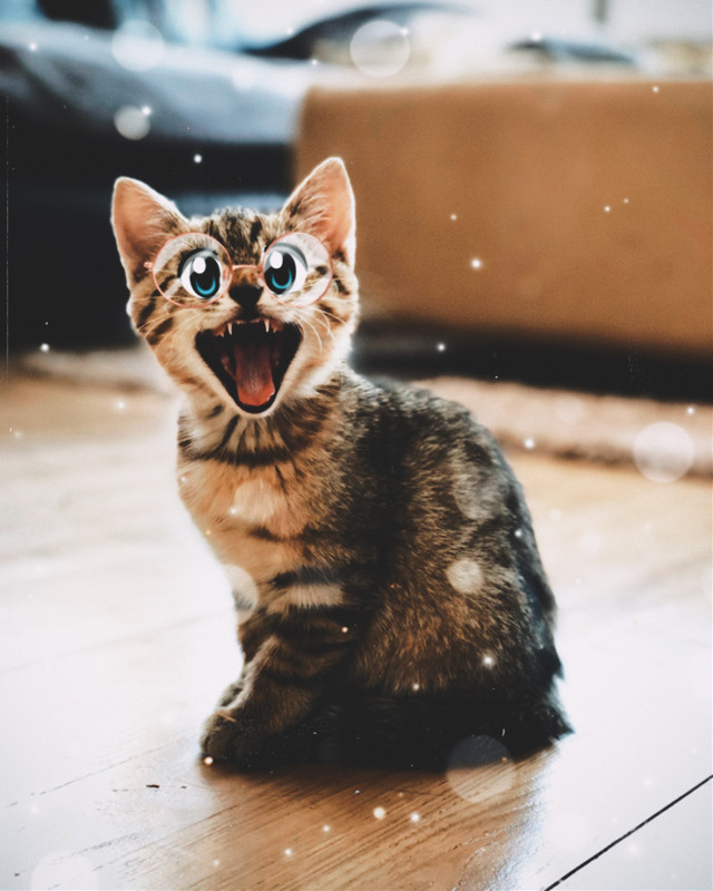 #cartooneyes #cat #cute #brindle #baby #bigyawn