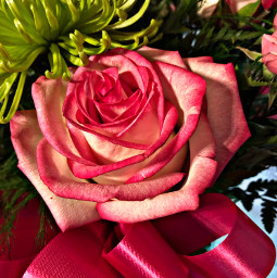 freetoedit rose pink flowers flower green bow ribbon beautiful bouquet