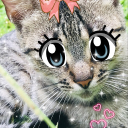 meow cats catsofpicasart cute cuteanimal eccartoonifiedanimals cartoonifiedanimals freetoedit