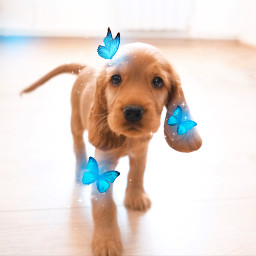 butterfly bluebutterfly butterflyaesthetic dog puppy puppylove art interesting aesthetic aestheticedit heypicart makeawesome madewithpicsart freetoedit