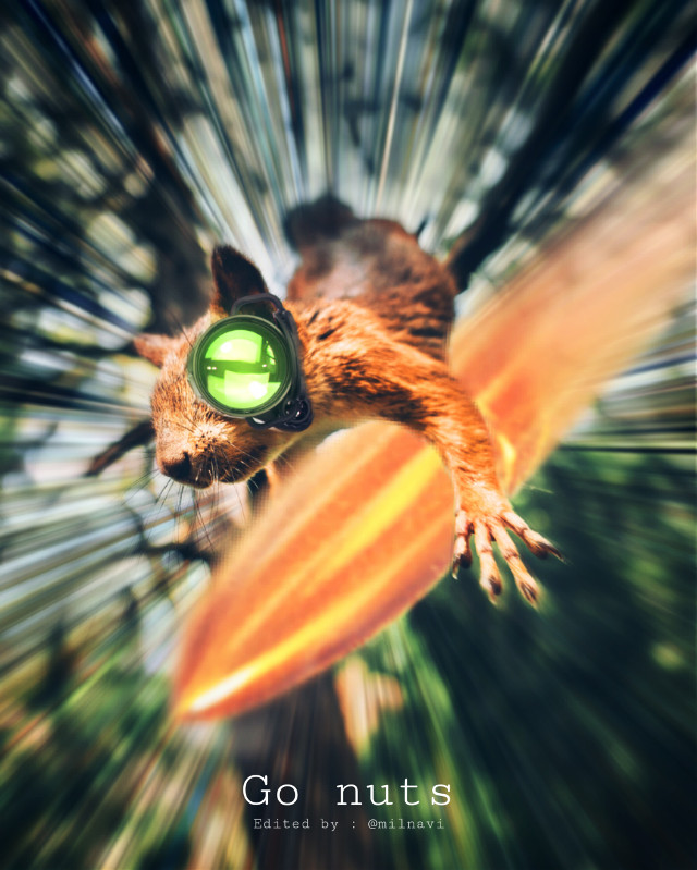 #squirrel #surreal #action #bullet #agent #move #motion This is what happen when you steal a chestnut🌰 from a squirrel!!! He go absolutely nuts!!!