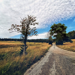 road dirtroad sky clouds trees landscape nature beautifulday beautifulnature myphoto summer summertime freetoedit