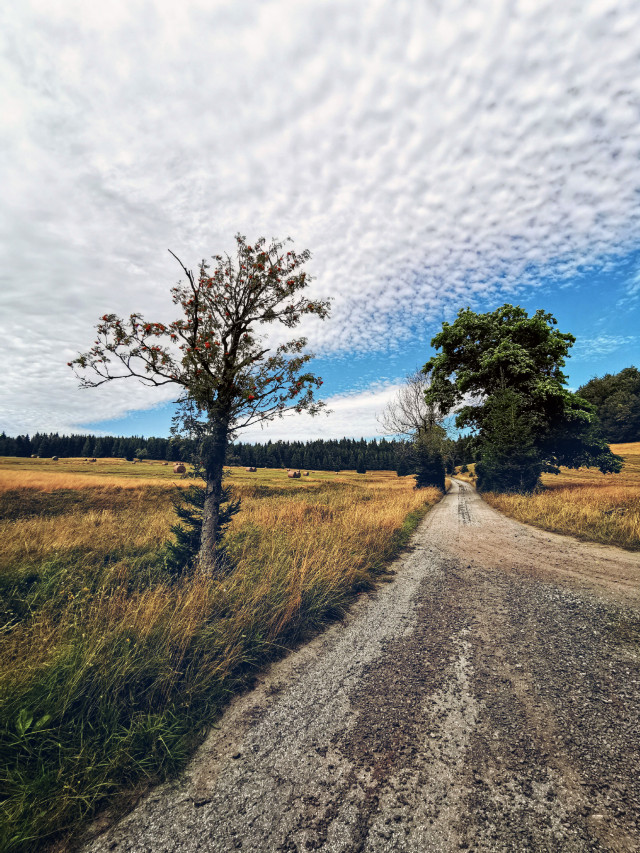 #road #dirtroad #sky #clouds #trees #landscape #nature #beautifulday #beautifulnature #myphoto #summer #summertime