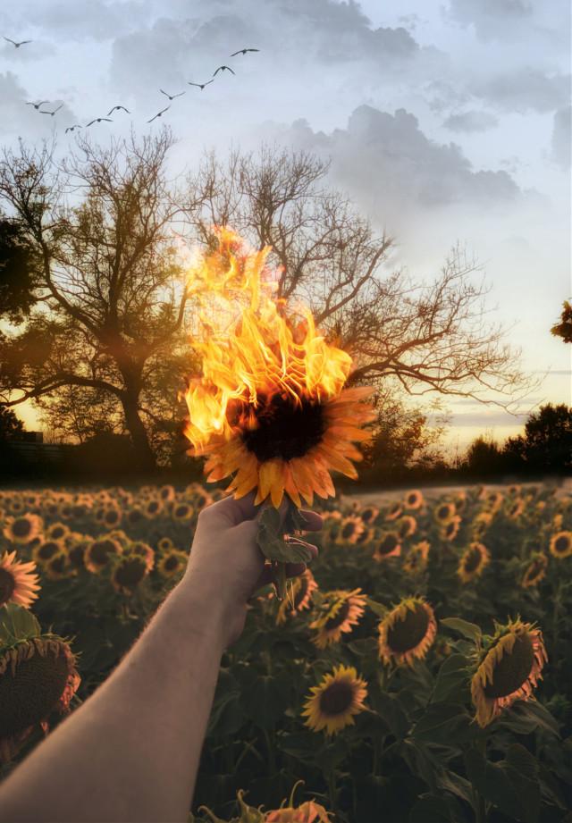 Fire!! #myedit #sunset #madebyme #araceliss #freetoedit