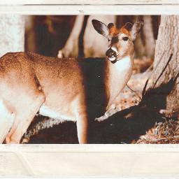 freetoedit deer 90svibes 90svintage 90saesthetic