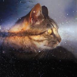cat stars space