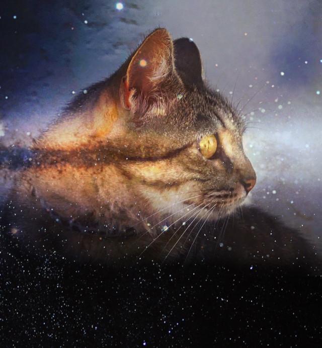 Space cat #cat #stars #space