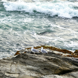 naturephotography atlanticocean rocks seegulls windyday freetoedit