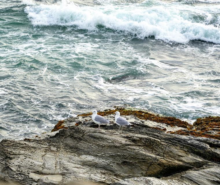 #naturephotography #atlanticocean #rocks #seegulls #windyday Happy Friday!
