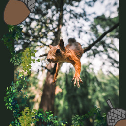 squirrel autumn autumncolors autumnvibes aesthetic aestheticedit leave leaveschanging fall fallaesthetic irchangtime hangtime freetoedit