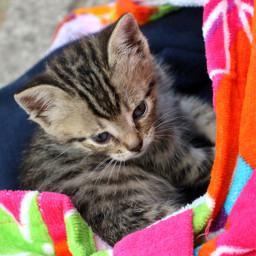 myphotography petsandanimals cat cute